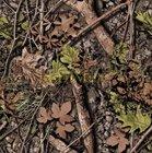 maskáč polyester 600D/600D/PVC nános-potisk větve+listí