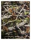 maskáč polyester 600D/300D/PVC nános-potisk stromy,listí